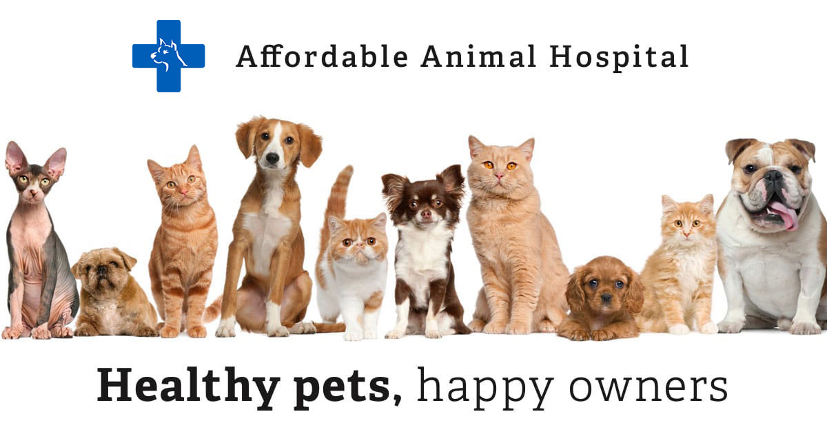 Pricing Affordable Animal Hospital Los Angeles